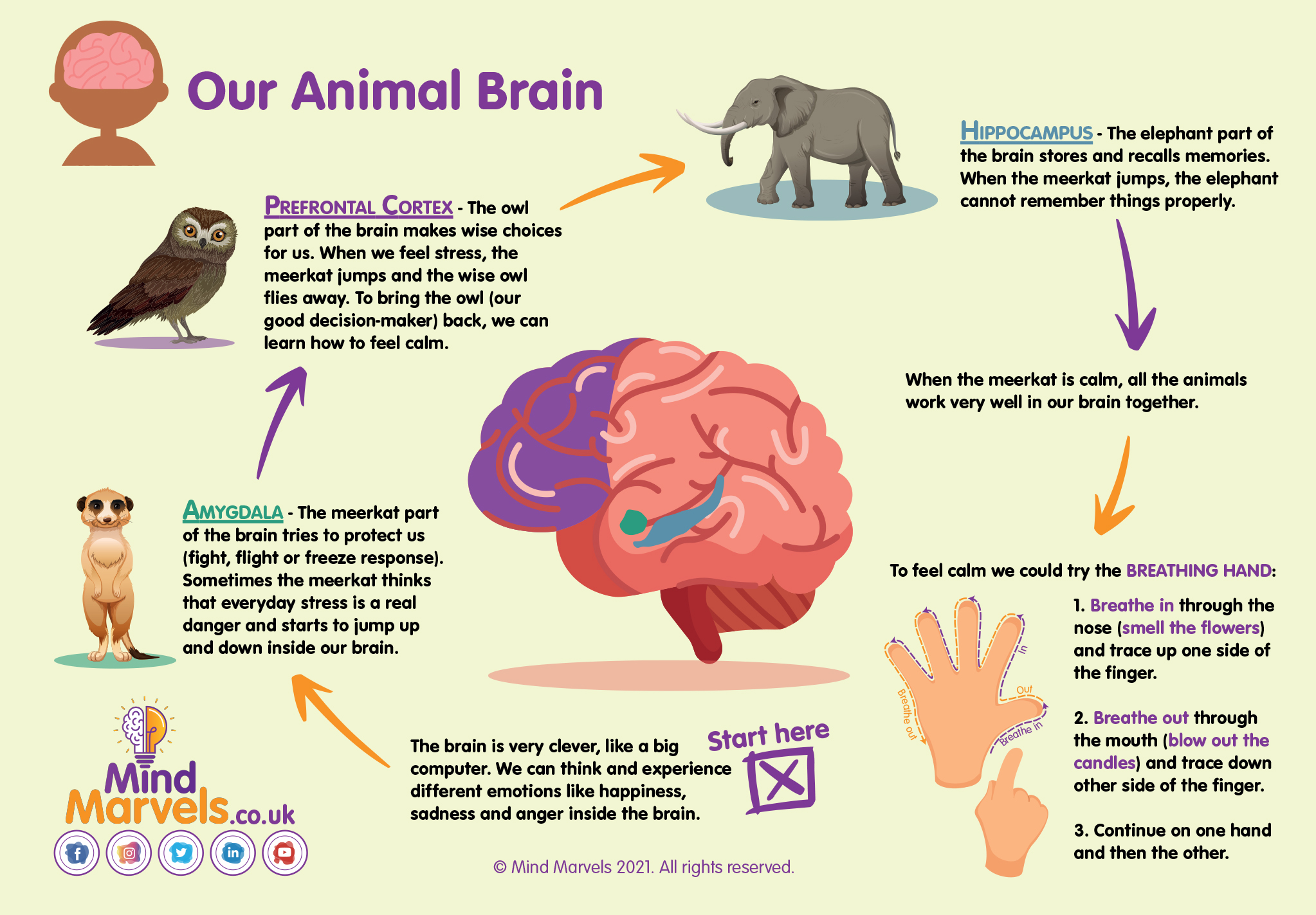 Mind Marvels Infographic Anxiety